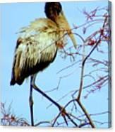 Treetop Stork Canvas Print
