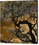 Treetop Sunset Canvas Print