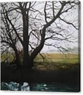 Trent Side Tree. Canvas Print