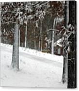 Tress Of Snow Canvas Print