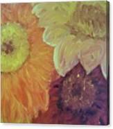 Tri Colored Daisies Canvas Print