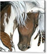 Tri Colored Pinto Horse Canvas Print