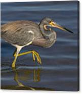 Tricolored Heron 1 Canvas Print