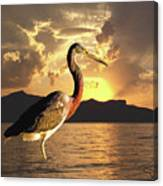 Tricolored Heron At Sunset Canvas Print