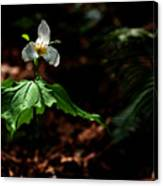 Trillium In The Woods Canvas Print