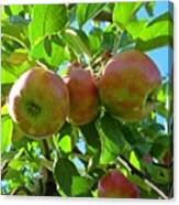 Trio Of Apples Canvas Print