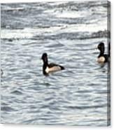Trio Of Ducks Canvas Print