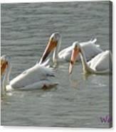 Trio Pelicans Canvas Print