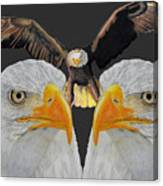 Triple Eagle Canvas Print