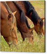 Triple Mustang Treat Canvas Print