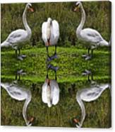 Triplets In Reflection Canvas Print