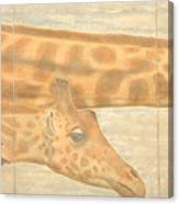 Triptych Giraffes General View Canvas Print