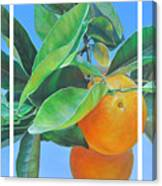 Triptyque Orange Canvas Print
