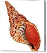 Triton Shell On White Vertical Canvas Print