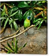 Tropical Bird 3 Canvas Print