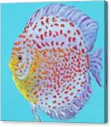 Tropical Discus Fish With Red Spots Canvas Print