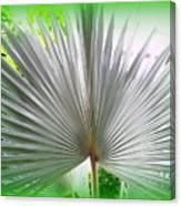 Tropical Fan Canvas Print