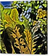 Tropical Foliage A-la Monet Canvas Print