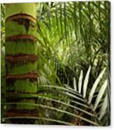 Tropical Forest Jungle Canvas Print