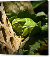 Tropical Green Frog Canvas Print