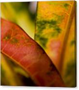 Tropical Leaf Abstract Canvas Print