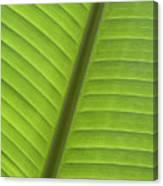 Tropical Leaf Detail Canvas Print