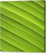 Tropical Leaf Patterns Canvas Print