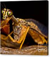Tropical Mantispid Canvas Print