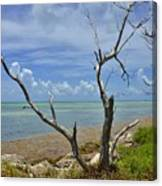 Tropical Oasis Canvas Print