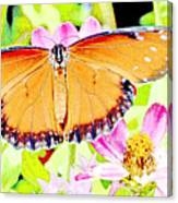 Tropical Queen Butterfly, Soldier Butterfly Canvas Print