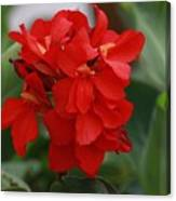 Tropical Red Canna Lilly Canvas Print