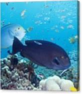 Tropical Reef Fish Canvas Print