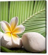 Tropical Still Life Canvas Print