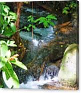 Tropical Stream Canvas Print