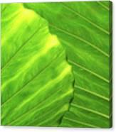 Tropical Vibrant Green Canvas Print