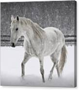 Trot In The Snow Canvas Print