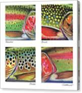 Trout Colors Canvas Print