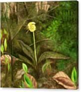 Trout Lily Canvas Print