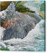 Trout Stream Canvas Print