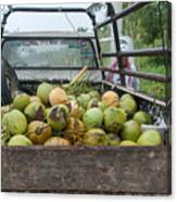 Truckload Of Coconuts Canvas Print