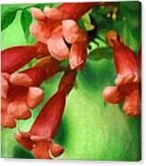 Trumpet Flowers Canvas Print
