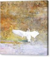 Trumpeter Returns Canvas Print