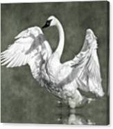 Trumpeter Swan In The Fog Canvas Print