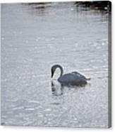 Trumpeter Swan Yellowstone Canvas Print