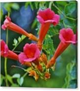 Trumpetflower Bush Photograph By Beth Deitrick