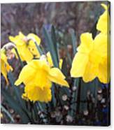 Trumpets Of Spring Canvas Print