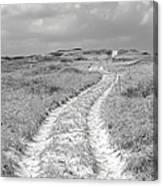 Truro Dune Trail Canvas Print