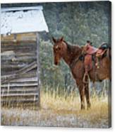 Trusty Horse  Canvas Print
