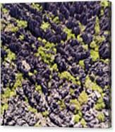 Tsingys, Karst Formations In The Tsingy Canvas Print