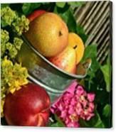 Tub Of Apples Canvas Print